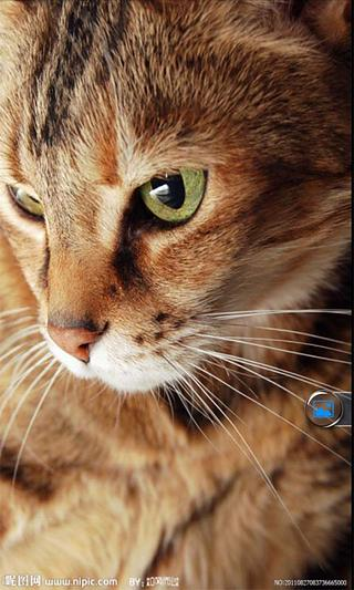 壁纸 动物 猫 猫咪 小猫 桌面 320_533 竖版 竖屏 手机