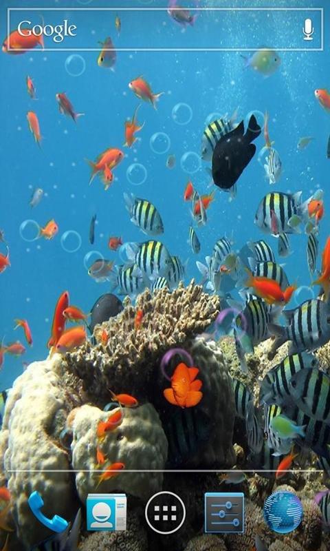 海底世界動態壁紙,高清柔和的海底世界畫面讓您手機更加高雅溫馨,有n
